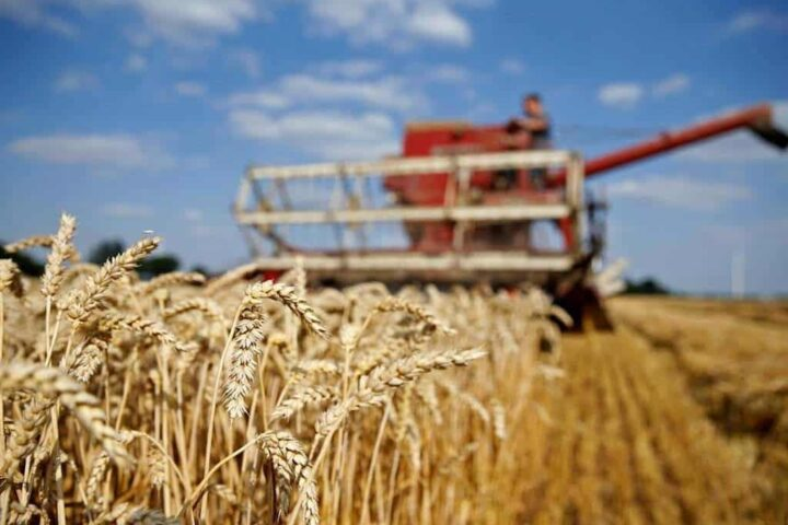 Ethiopia issues tender to buy 400,000 tonnes of wheat